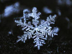 Snowflake Networks